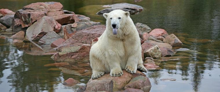040714_From_Orsa_Bear_Park_Sweden_Daily_Scandinavian