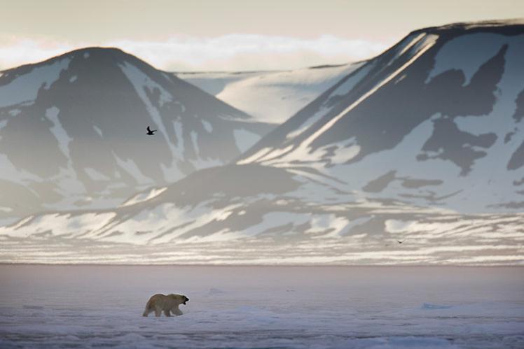 031214-polar-bear-in-svalbard