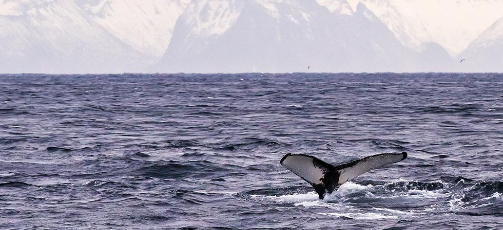 221214-whalesafari-andenes-norway