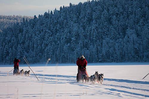 020315-dogsledding-in-sweden-daily-scandinavian