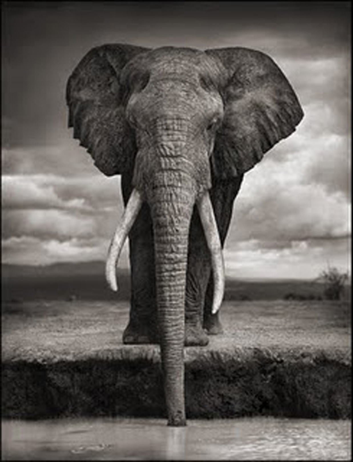 Drinking elephant by Nock Brandt
