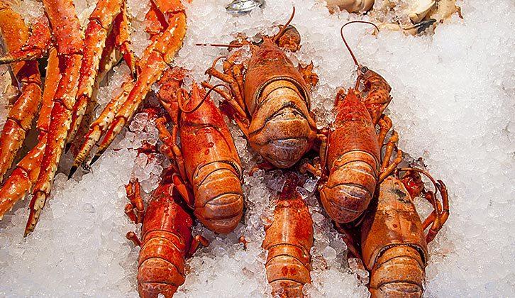 Scandinavian Shellfish & Molluscs