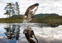 Nordic Nature Photographer of the Year