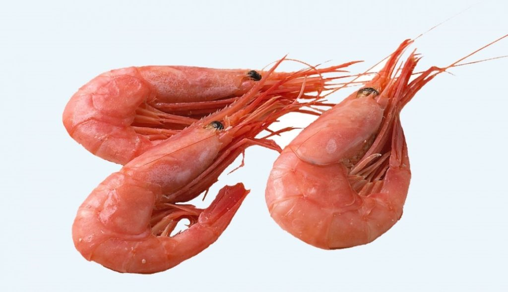 Scandinavian Shrimp