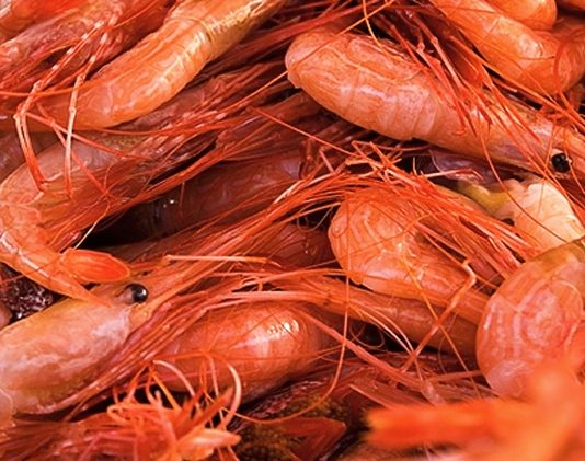 Scandinavian shrimp