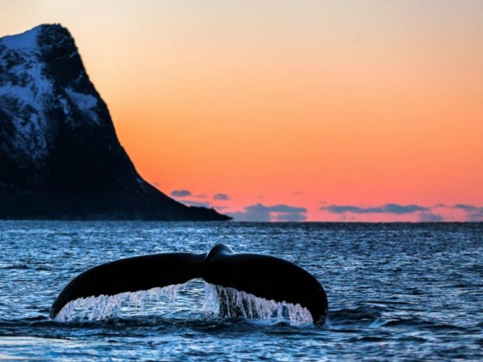 Norway – The Kingdom of Whales