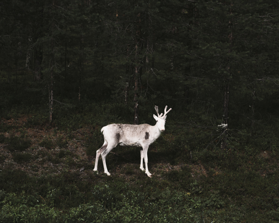 "World of the ""Forest Finns"" in Norway"