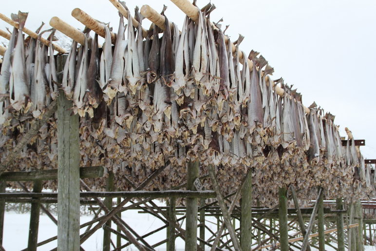 Dried Fish in Scandinavia
