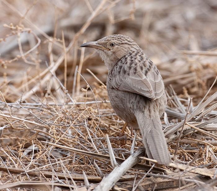 Swedish Ornithologist has Co-written Influential Handbook of Western Palearctic Birds