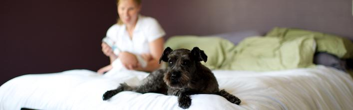 World's First Dog Centric Apartment House – in Denmark