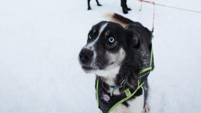 Snowshoeing and Dogsledding Adventure in Norway