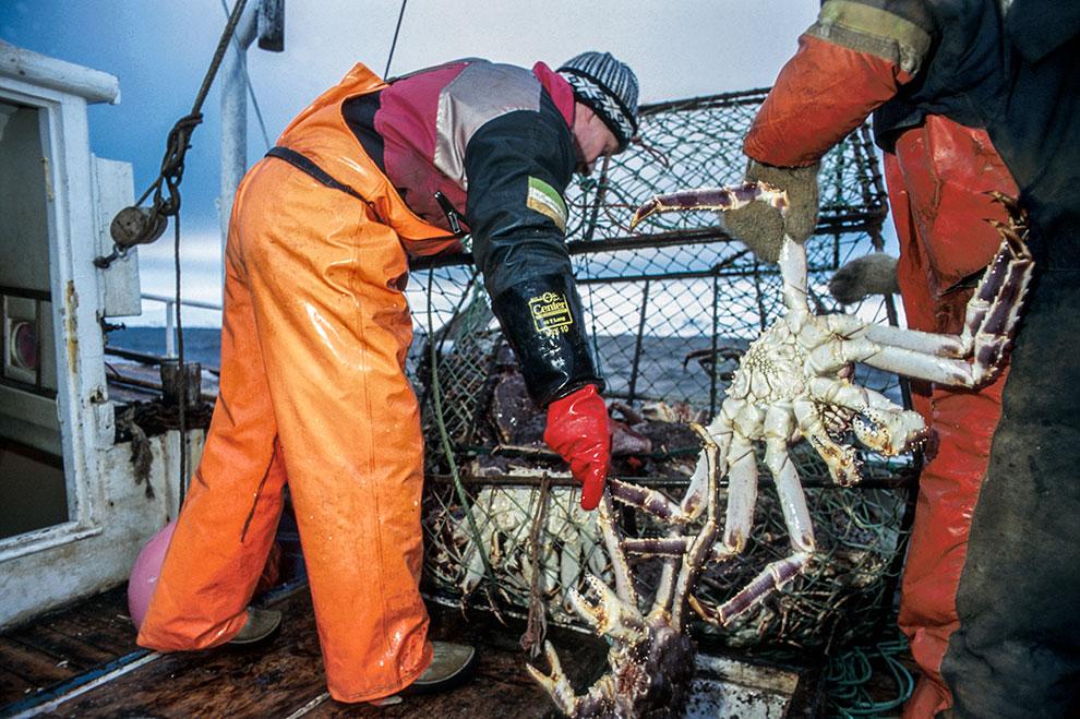 The Norwegian Monster Crab