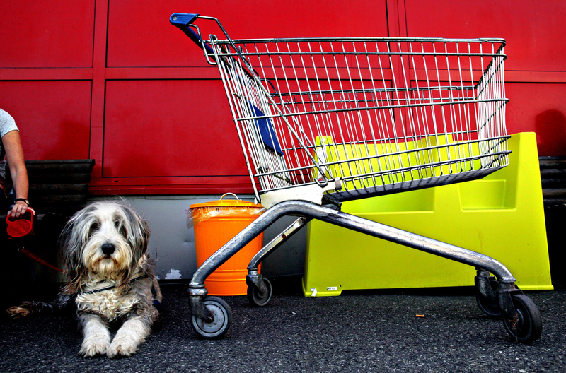 Rules for Bringing Your Dog with You to Scandinavia