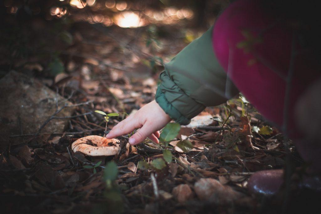 Scandinavian Mushrooms