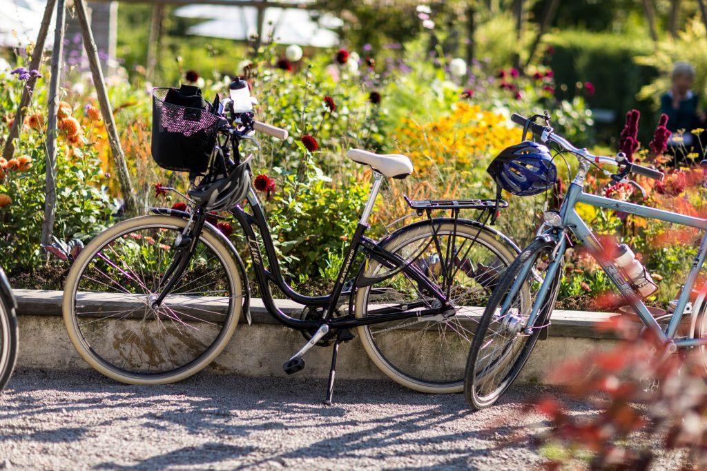 Picturesque Biking in Sweden