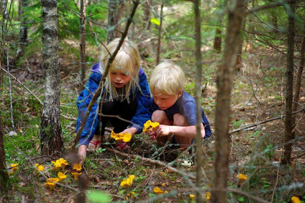 Attractions in Dalarne Sweden